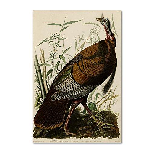 American Wild Turkey Cock by John James Audobon, 16x24-Inch Canvas Wall Art