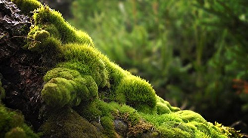 (Live Moss Assortment for Terrariums - Frog, Haircap, Cushions, Lichen )