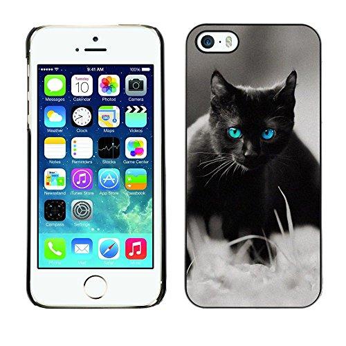TopCaseStore / caoutchouc Hard Case Housse de protection la Peau - Cute Black Cat Siamese White Pet Kitten - Apple iPhone 5 / 5S