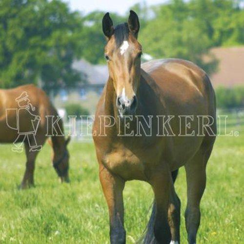 Kiepenkerl Country Horse 2120 Pferdeweide Balance | 10 kg Rasensaat