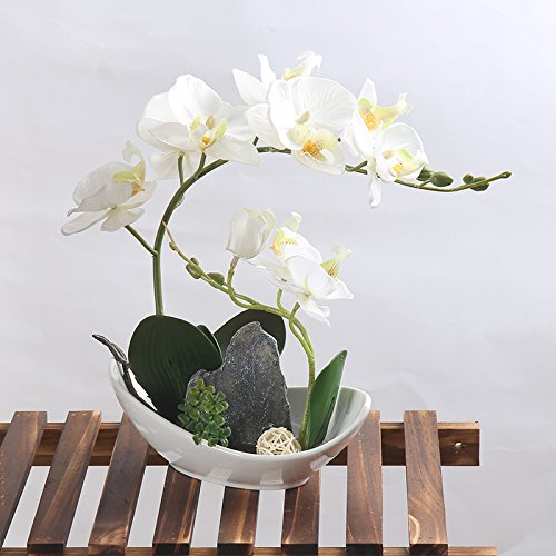 Leeman Artificial Lifelike Real Touch Flowers Arrangement Phalaenopsis Bonsai Orchid Miniascape Home Decoration Holiday Gift (White 531)