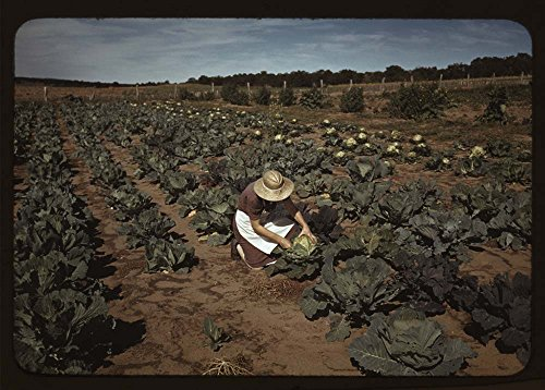 (Mrs. [Jim] Norris with homegrown cabbage, one of the many vegetables which the homesteaders grow in abundance, Pie Town, New Mexico)