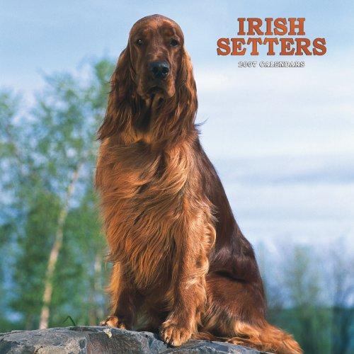 Irish Setters 2007 Calendar