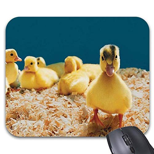 Yellow Fuzzy Ducklings Loveable Baby Mouse Pads 9.25 for sale  Delivered anywhere in Canada