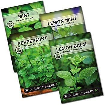 Mint Peppermint 5000 Seeds Mentha piperita