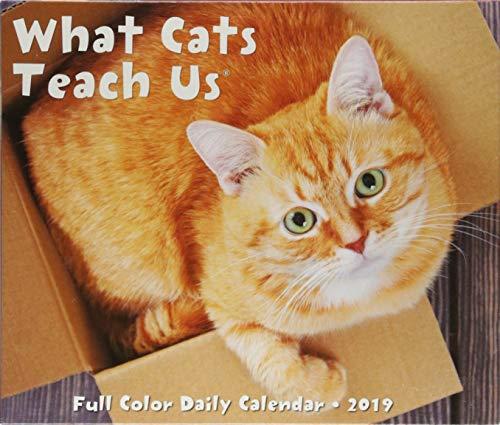 What Cats Teach Us 2019 Box Calendar by