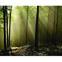 J.P. London uStrip Peel and Stick Removable Wall Decal Sticker Mural, Forest Rays Morning Light Tonal Trees, 10.5 by 8.5-Feet