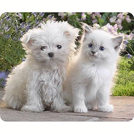 Gaming Mouse Pad forma de Rectangular Gatos Animales Perros personalizado Alfombrilla de ratón diseño durable de