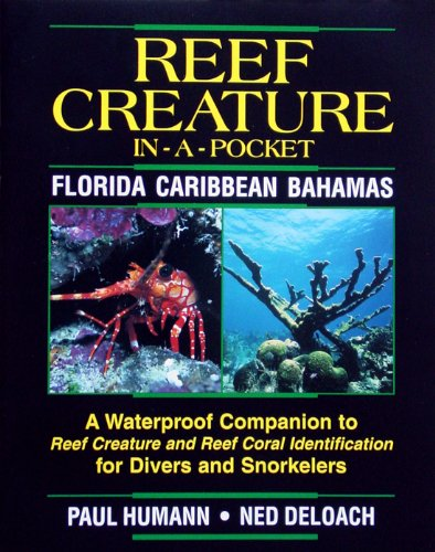 Reef Creature in-a-pocket Florida, Caribbean, - Florida Reef