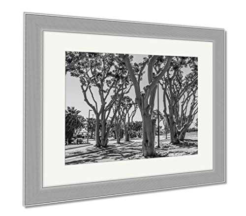 Ashley Framed Prints Coral Trees Lining A Street At Embarcadero Park South In San Diego California, Wall Art Home Decoration, Black/White, 34x40 (frame size), Silver Frame, - Springs The Promenade Coral