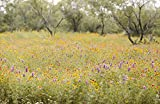 David's Garden Seeds Wildflower Texas Native Wildflower Mix WD8642 (Multi) Open Pollinated Seeds One Pound Package