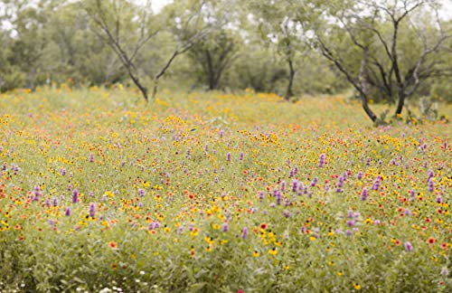 David's Garden Seeds Wildflower Texas Native Wildflower Mix WD8642 (Multi) Open Pollinated Seeds One Pound Package by David's Garden Seeds