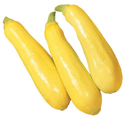 (Burpee Saffron Summer Squash Seeds 100 seeds)