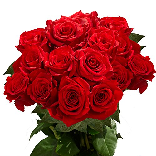 GlobalRose 50 Fresh Long Stem Red Roses
