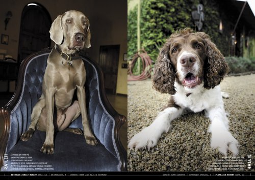 Wherever wine is made, you're likely to find a good dog stalking the cellar or the vineyard.