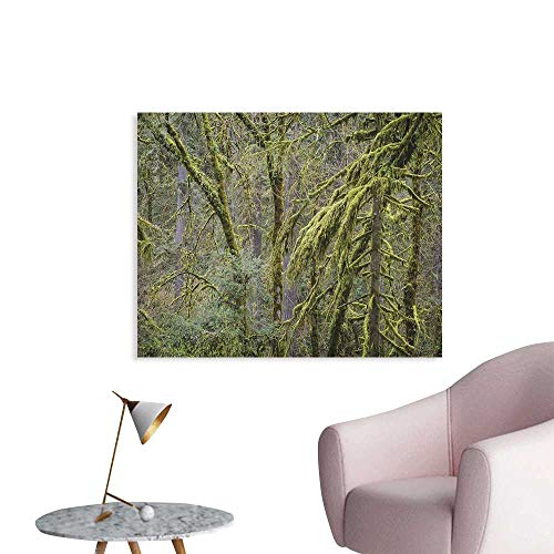 Anzhutwelve Rainforest Wall Picture Decoration Old Pine Trees in Wild Nature Moss Foliages Tranquility in Jungle Illustration The Office Poster Green Brown W36 xL32 for $<!--$38.70-->