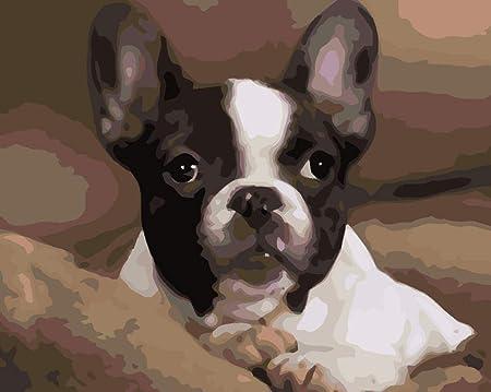 Boston Terrier WYTCY Dipingi con I Numeri Kit di Pittura Fai da Te Adatto per Adulti E Principianti40*50CM Tela Pittura A Olio su Tela Pittura di Arte Moderna