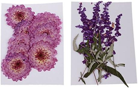 乾燥した花 押し花 手工芸品 ギフト 約20個入り