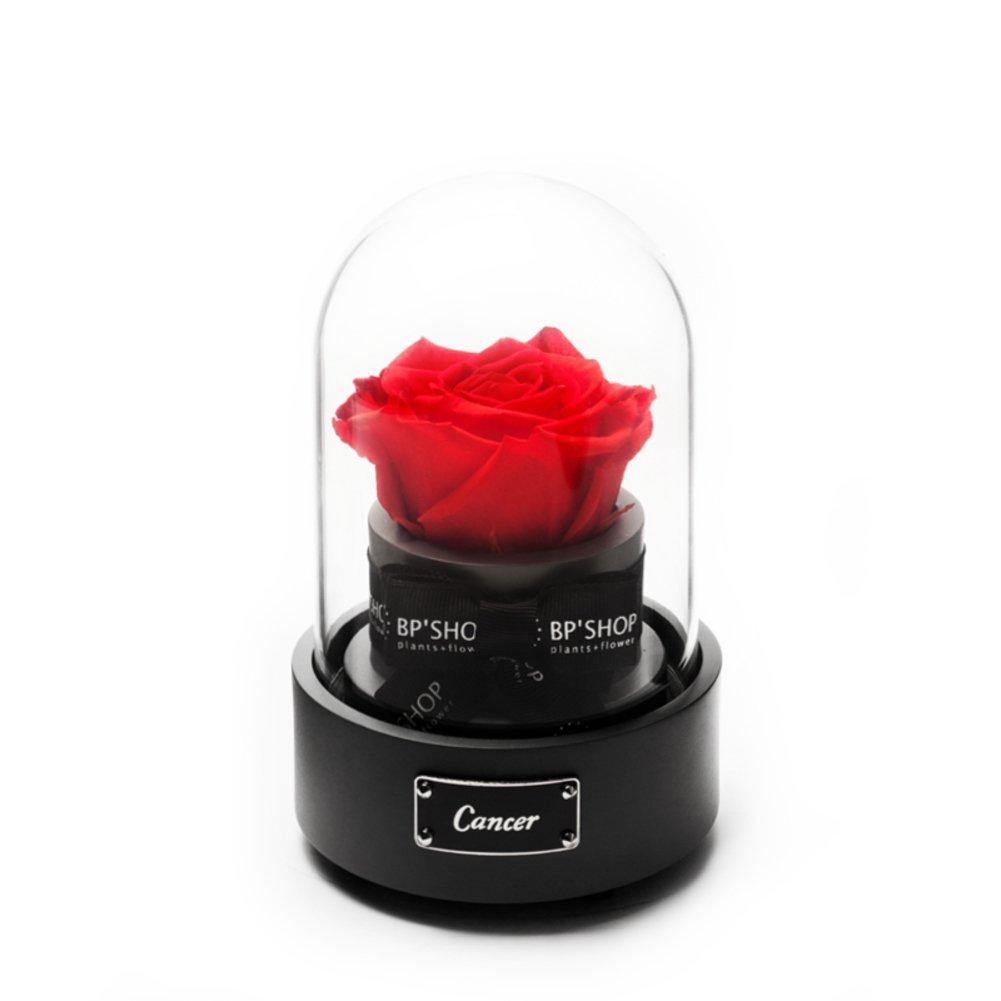 Unsterblichen blumen spieluhr,Rose kristallkugel Glasabdeckung ...