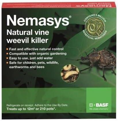 Nemasys vine weevil killer Nematodes