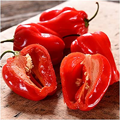 Package of 100 Seeds, Red Habanero Pepper (Capsicum chinense) Non-GMO Seeds by Seed Needs