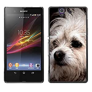 PC/Aluminum Funda Carcasa protectora para Sony Xperia Z L36H C6602 C6603 C6606 C6616 Bolognese Mutt Dog White Fur Canine / JUSTGO PHONE PROTECTOR