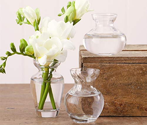Buy bulb forcing vases