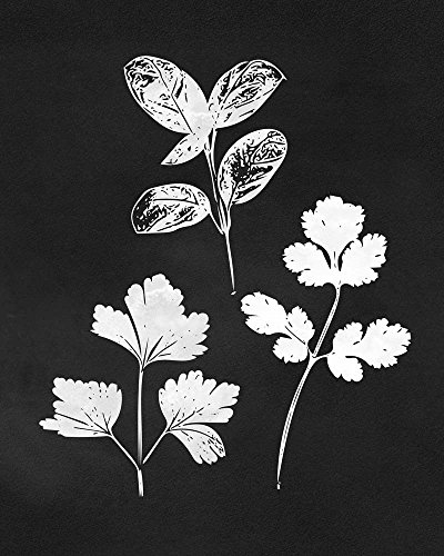 Herb Trio by Linda Woods Art Print, 14 x 18 inches
