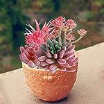 JUSTDOLIFE-Artificial-Succulent-Mini-Fake-Succulent-for-Home-Decor