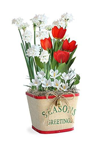 BloomingBulb 91143 Season's Greetings Pre-Planted Bulb Gift - Bulb Basket