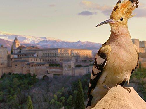 Alhambra: The Oasis in the Desert (Alhambra Fountain)