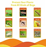 12 Pack Sticky Fruit Fly Trap and Fungus Gnat Traps