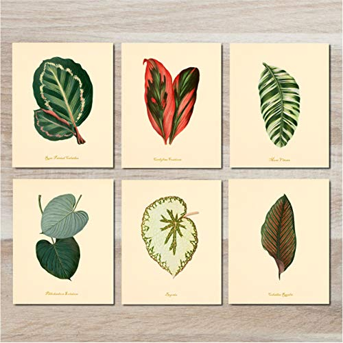 (Wall Art - Vintage Leaves (Set of 6) - 8x10 - Unframed - Botanical Prints)