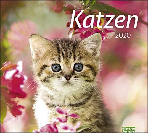 Timesandmore Katzen Bildkalender. Wandkalender 2020. Monatskalendarium. Spiralbindung. Format 30 X 27 Cm