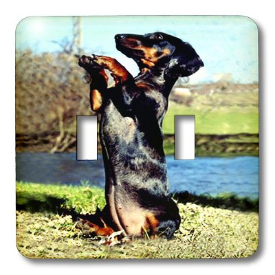 3d Rose 3dRose lsp_593_2 Dapple Dachshund - Double Toggle...