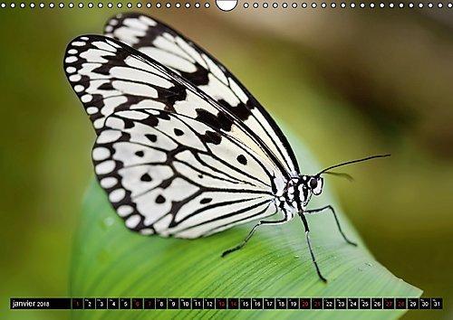 Papillons Du Monde, Vus De Pres 2018: Portraits De Douze Papillons Aux Couleurs Magnifiques, Originaires D'afrique, D'asie Et D'amerique Du Sud - Macrophotographie. (Calvendo Animaux) (French Edition) by Calvendo Verlag GmbH
