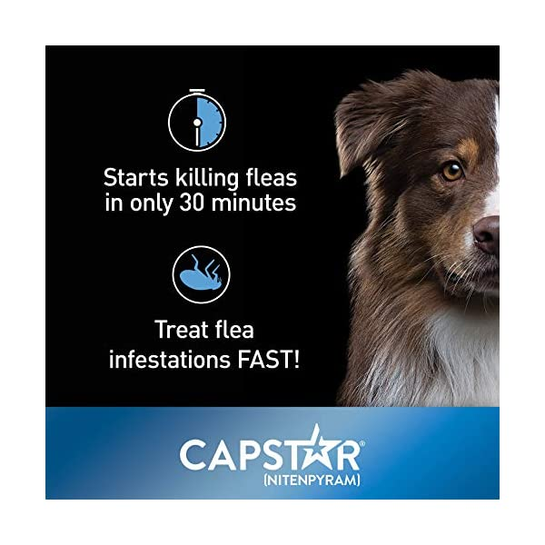 Elanco-Animal-Health-Capstar-Fast-Acting-Oral-Flea-Treatment-for-Small-Dogs-6-Doses-57-mg-2-25-lbs
