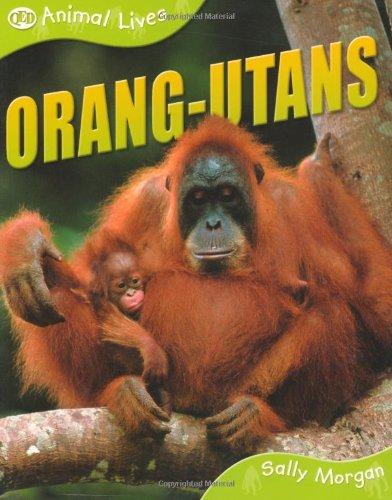 Orang-utans (QED Animal Lives S.)