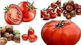1000 tomatoe seeds - OldLadyRenee: 6 types! Super Tomato Lovers Box Set!! 1000+ Seeds