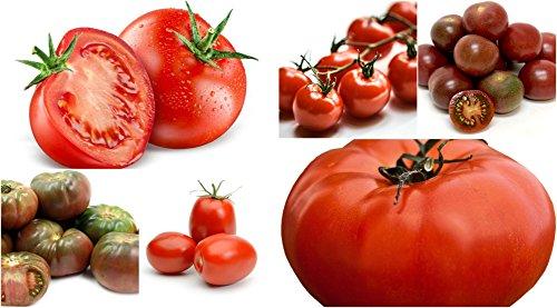 1000 tomatoe seeds - 5