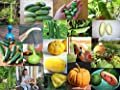 Seed Varieties Gourd Cucumber Pumpkin Squash Melon Selection Luffa Melon Summer