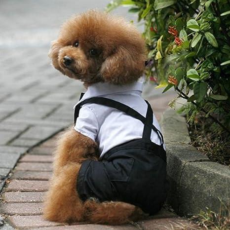 Mascota Perro Traje Esmoquin pajarita cuello perrito camisa ...