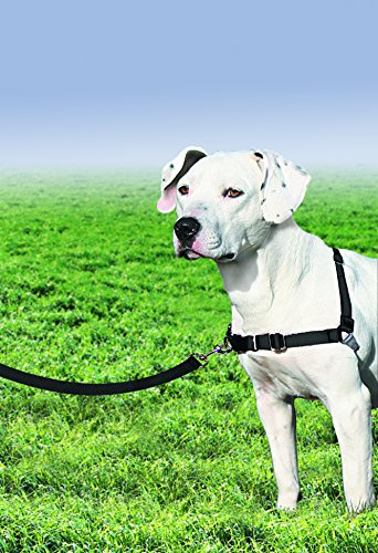 Large Product Image of PetSafe Easy Walk Harness,  Medium, BLACK/SILVER for Dogs