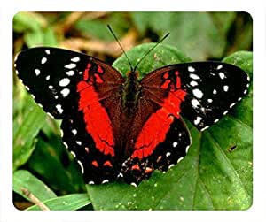 Nice Butterfly And Flower PoP Oblong Mouse Pad