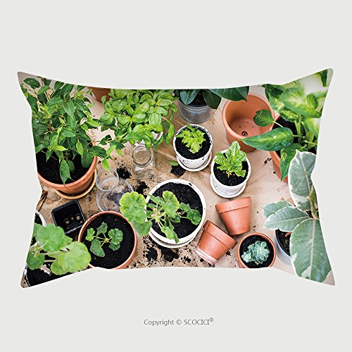 Custom Microfiber Pillowcase Protector Natural Plants In Pots, Green Garden On A Balcony. Urban Gardening, Home Planting_45684288 Pillow Case Covers Decorative