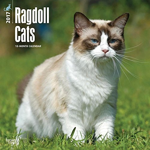 Ragdoll Cats - 2017 Calendar 12 x 12in