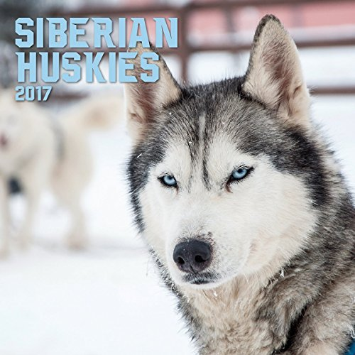 Turner Photo 2017 Siberian Huskies Photo Wall Calendar, 12 x 24 inches opened (17998940051)