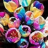 Onbio 100pcs/ Bag Rainbow Tulip Bulbs Seeds Garden Flower Plant Flowers
