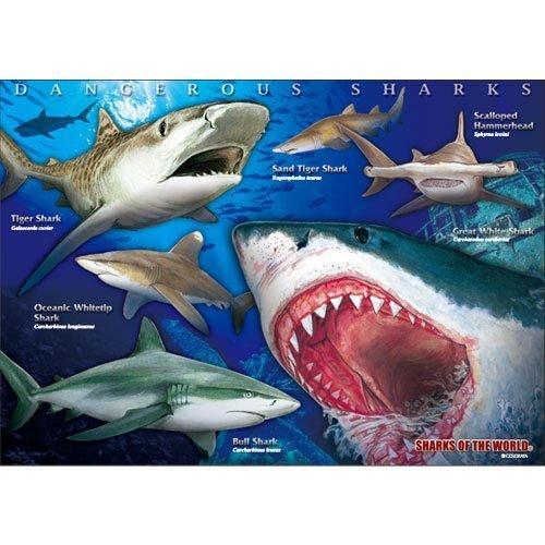 danger-shark-real-jigsaw-a3-size-720-piece-japan-import