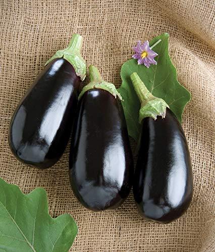 David's Garden Seeds Eggplant Italian Nadia SL7492 (Black) 25 Non-GMO, Hybrid Seeds